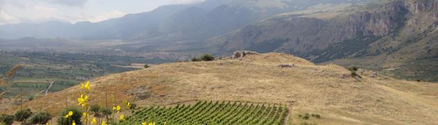 Azienda vitivinicola Rizzo Gennaro