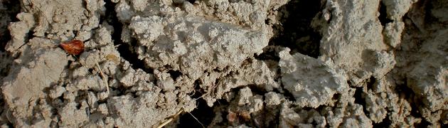 Tenuta Dioscuri