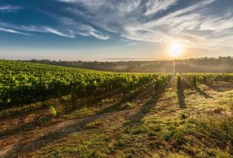 """Attilio Scienza """"volorizziamo i vitigni autoctoni"""" e cita la Calabria"""